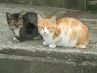 猫写真イメージ