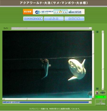 うっすらとした灯りに照らされた水槽の中をただようマンボウたち。普通の水族館では見られない情景をパソコン上で閲覧することができる。