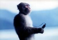 ウォークマンの瞑想サル・初代チョロ松イメージ