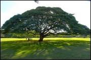 日立の樹イメージ