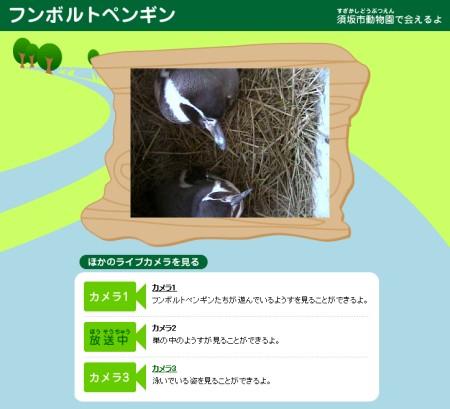 「デジタルアニマルパーク」内フンボルトペンギンのコーナー。巣の中でおねむのようす。