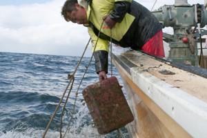 タコ箱漁イメージ