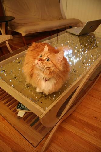 センサーと発光ダイオードの組み合わせで完成した「Twinkling coffee table」。猫のしっぽに反応しているのが分かる。