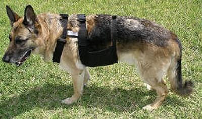 愛犬用ひえひえベスト「ChillyDog」装着の図
