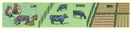 放牧による耕作放棄地の管理と農地の保護の事例