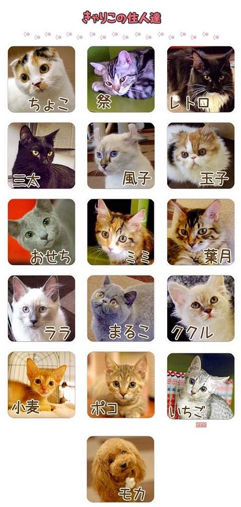 「キャリコ」の住民、ではなく住猫たち15匹+1