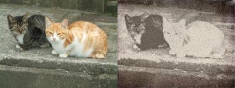 写真ネタでは欠かせない「猫写真」。元の写真のサイズがやや小さくピントが甘めだったところ、逆に幕末調の雰囲気がアップした
