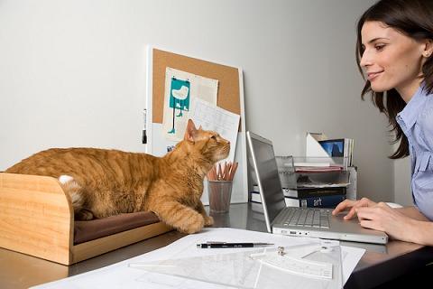 専用席を用意され、「猫様」も満足。飼い主も安心して作業が出来るし、彼らからいやしパワーを常に受け取ることが可能