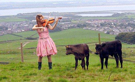 美女と野獣ならぬ美女バイオリニストAmy Worth嬢と二頭の和牛(Mail Onlineより)