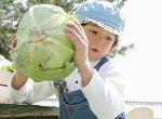 国産野菜の収穫イメージ