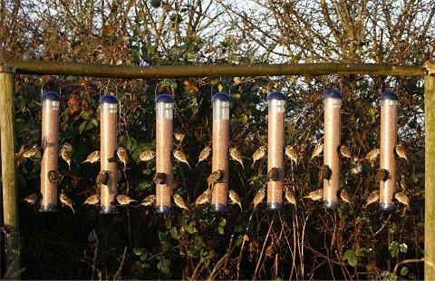 スズメにエサを与えるための「エサ与え機」にむらがるスズメたち(Mail Onlineより)。この農場では毎日100羽以上の野鳥が訪れるという。