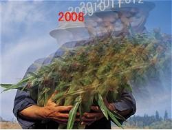 未来の収穫を先取りしたイメージ