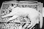 新聞と猫イメージ