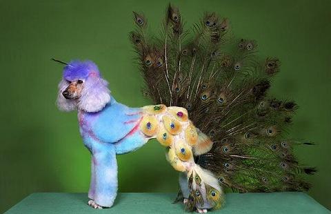 Sandra Hartness嬢の手にかかれば、プードルのシンディもドラゴンやクジャクに早変わり