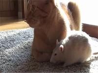 たたずむネズミのピーナッツ(Peanut)と猫のランジ(Ranj)イメージ