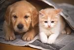 犬猫イメージ