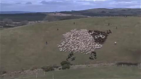 花火と「巨大な羊」(LEDは使わず、黒と白の羊で構成)