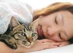 猫にいやされる女性イメージ