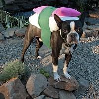 愛犬用お寿司コスチュームイメージ