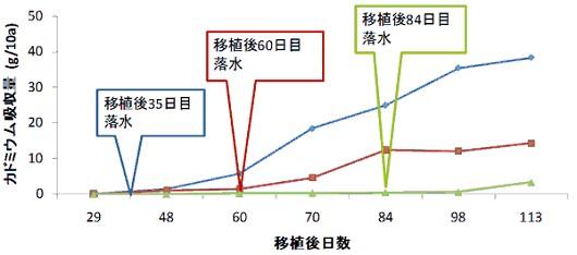 落水期の違いによるカドミウム高吸収イネ品種 「モーれつ」 のカドミウム吸収量の経時変化(温暖地で栽培)