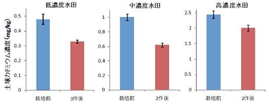 カドミウム高吸収イネ品種の栽培前と栽培後の土壌カドミウム濃度
