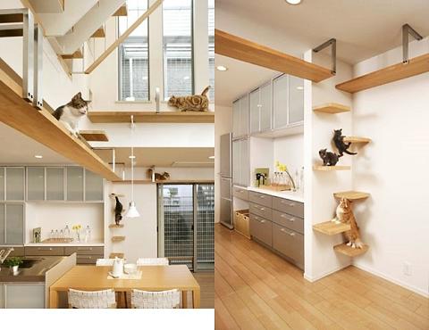 空間を有効に活用した「ネコの散歩道」。言葉通り猫屋敷状態。