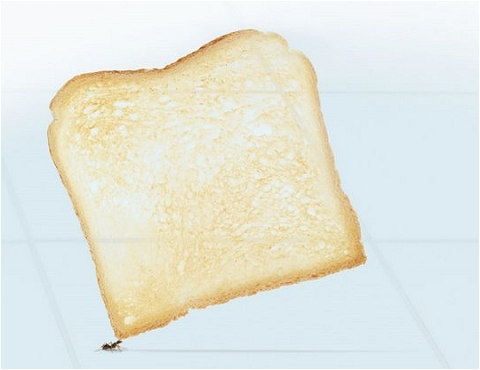 ↑ トーストの部分を拡大。パンの向こうのタイルの溝が見えることから「どれだけ薄いか」が分かる