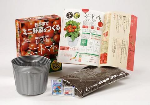 ↑ 我が家でミニ野菜をつくる1 ミニトマト