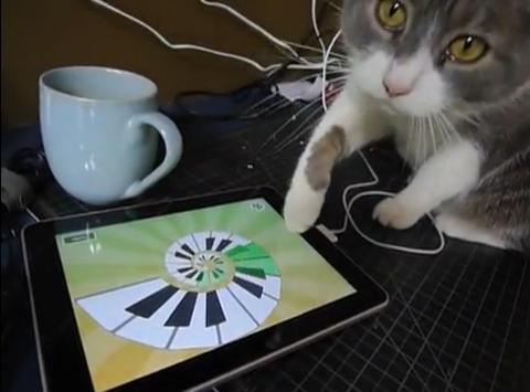 ↑ iggy investigates an ipad。