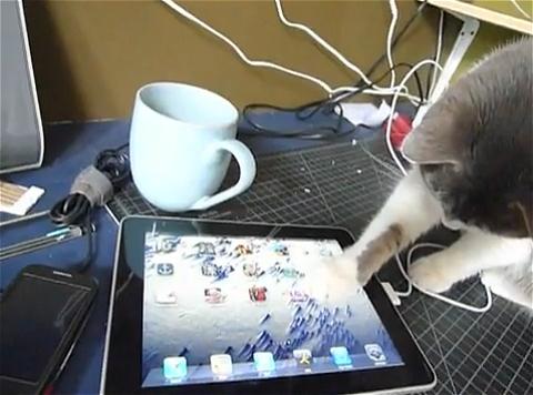 ↑ アイコン一覧の画面で主人が次のアプリケーションを動作させようとすると、その動きに興味深々。「自分でもやるにゃ」とばかりに邪魔をする