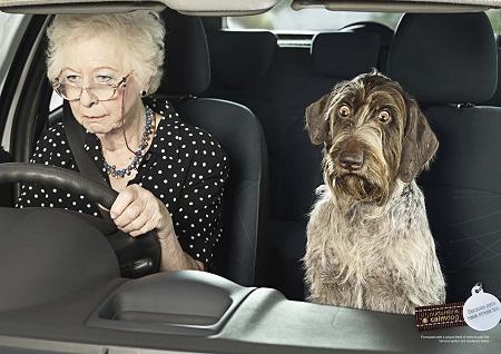 ↑ 運転でむっちゃ真剣になる老婆。彼女にいつも付き添っているワンちゃんもいつの間にか……