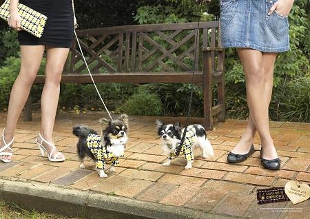 ↑ たまたま着ている服が同じだった……ということはよくあるが、お互いに気まずくなるもの。飼い主の気まずさは犬たちにも。