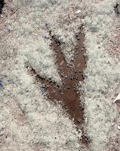 ↑ 大きな足跡が残されている。こいつがやったのか?