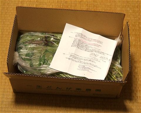 ↑ 苗は袋詰めにされ、箱に梱包された状態で送られてくる。植え方などの説明書付き。
