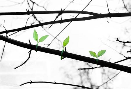 ↑ 試しに木の枝に巻いてみたところ