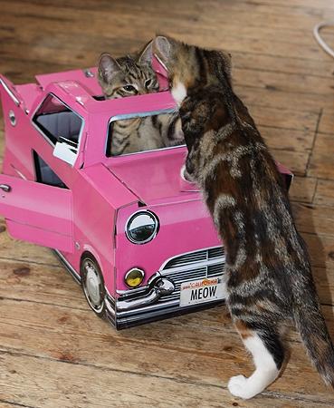 ↑ 完成図。商品に猫様は付いてきません