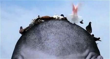 ↑ 男性の頭部分にあるえさをつつく鳥たち