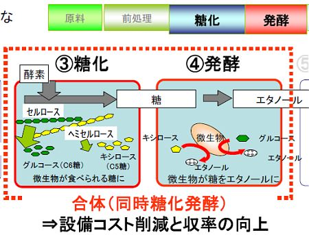 ↑ 糖化と発酵の両プロセスを一度にこなすのが、今回開発された新酵母菌(トヨタ開発酵母)