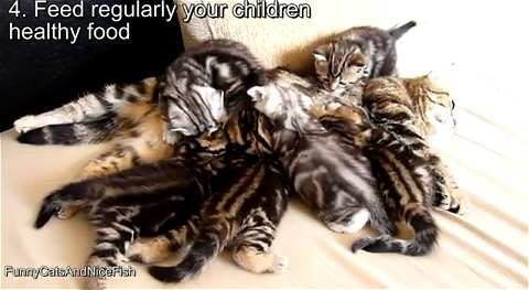 ↑ 10 tips to raise happy children by Mom-cat Coco。