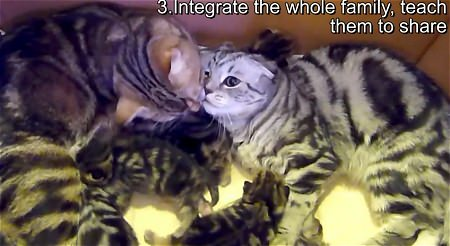 ↑ 3. Integrate the whole family, teach them to share
