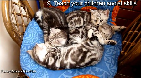 ↑ 9. Teach your children social skills