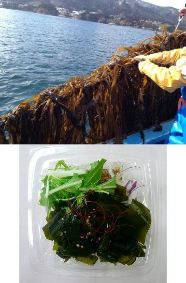 ↑ 収穫の様子と商品「三陸産わかめのサラダ」