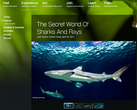 ↑ サメやエイの神秘(The Secret World Of Sharks And Rays、http://www.vanaqua.org/experience/feature/sharks-and-rays )