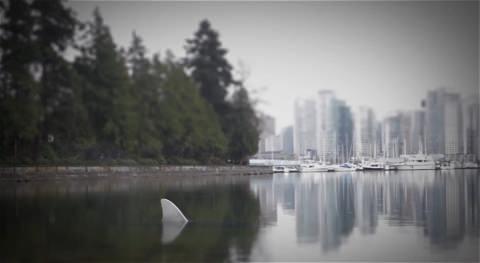 ↑ 公園内の湖(一応海とつながっているが)に突如として登場するサメ……の背びれ