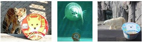 ↑ 商品のモデルとなった動物達。左からキタキツネ、ごまふあざらし、北極ぐま