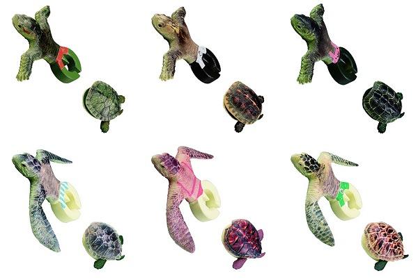 ↑ 亀は全部で6種類。上段左から「ミドリガメ」「セマルハコガメ」「ゼニガメ」、下段左から「アオウミガメ」「タイマイ」「アカウミガメ」
